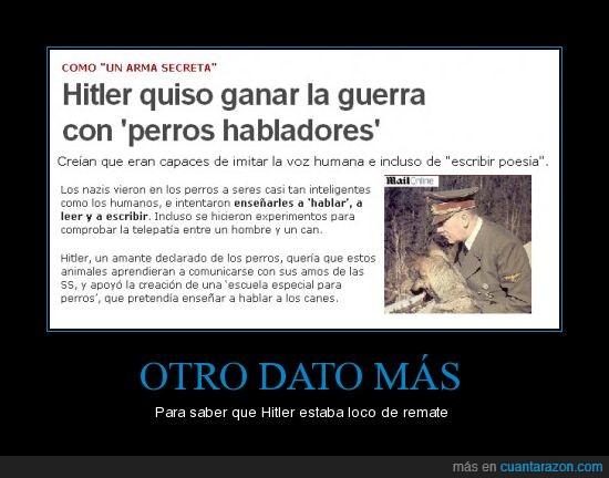guerra,hitler,loco,nazis,perros