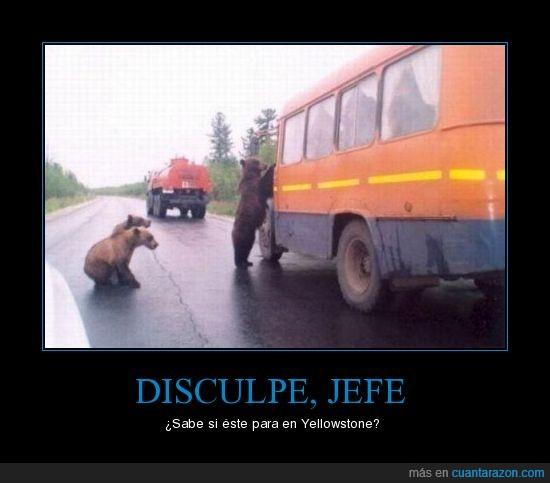 animales,autobús,oso,parada,Yogi