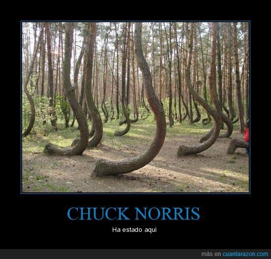 arbol,bosque,chuck,doblado,norris