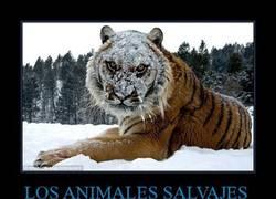 Enlace a LOS ANIMALES SALVAJES