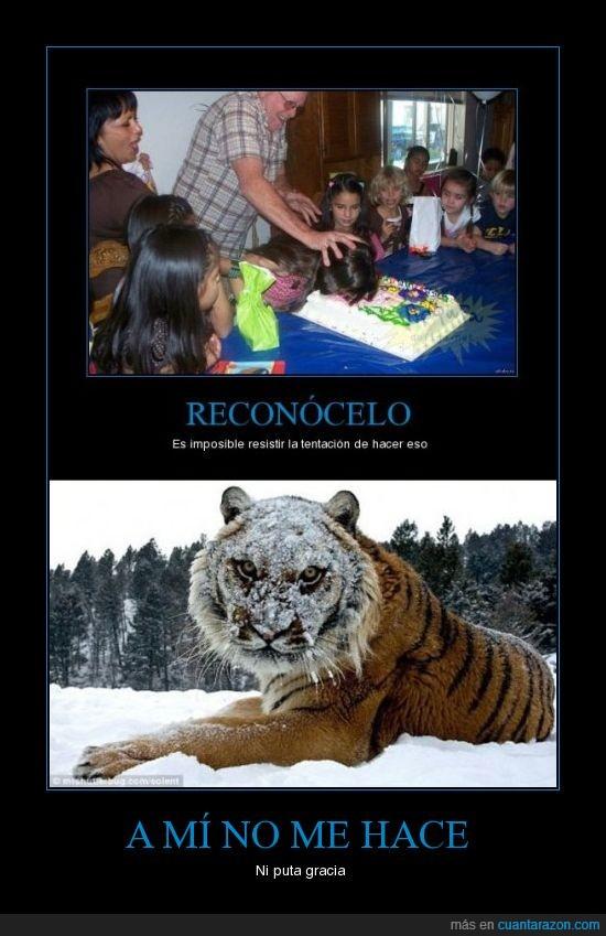 Tigre tarta chof