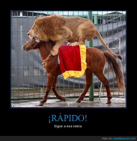 caballo,león,montar,zebra
