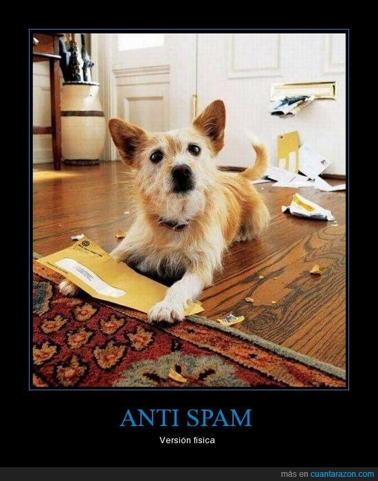 cartas,correo,morder,perro