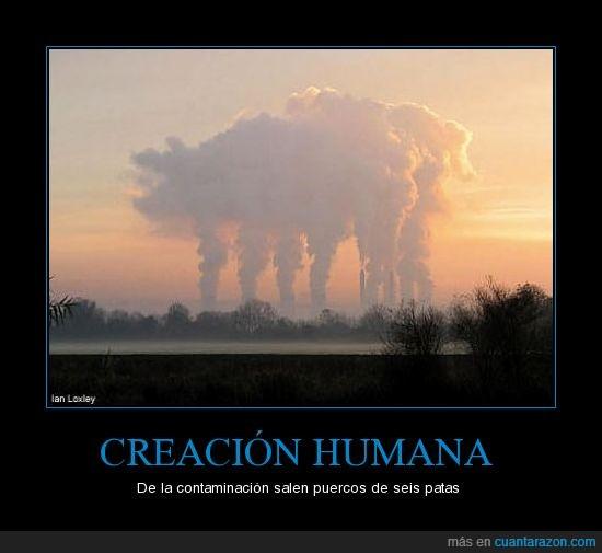 animales,contaminación,humo