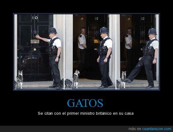 gatos,ministro britanico
