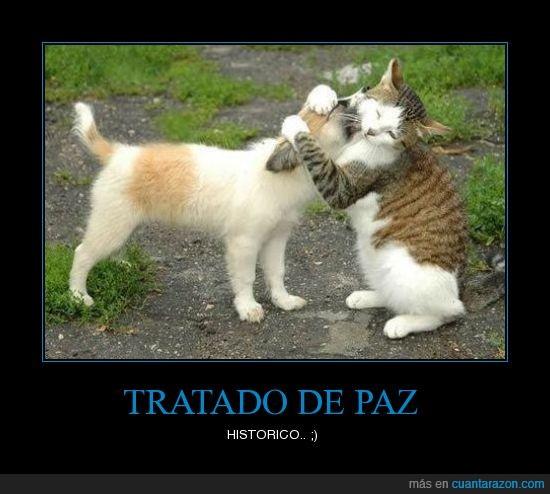 abrazo,gato,perro