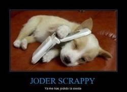 Enlace a JODER SCRAPPY