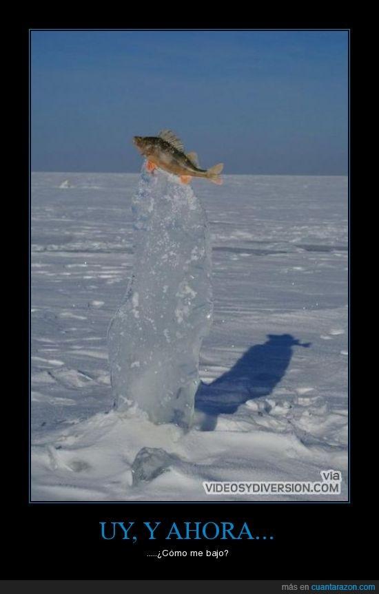 hielo,pez