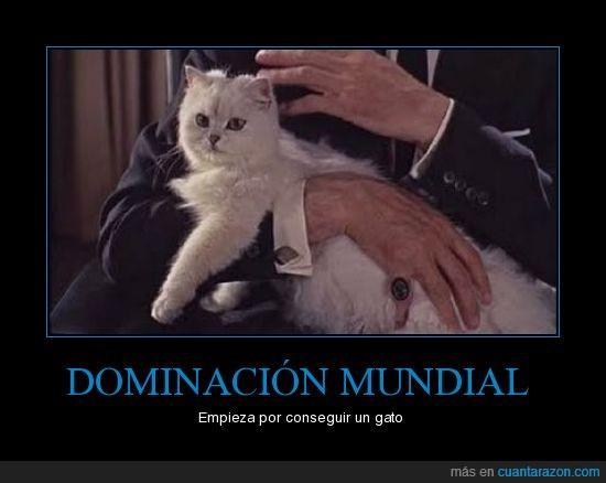 baldomero,dominar,gato,lider,madcat,mundo