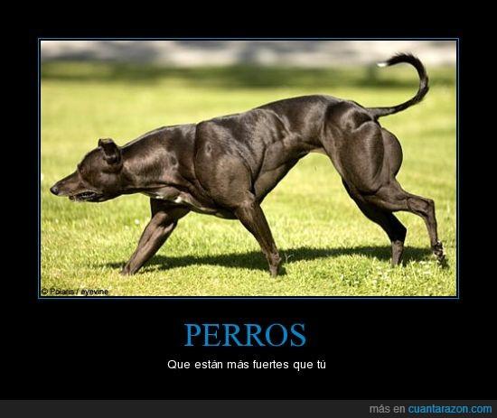 musculos,Perro