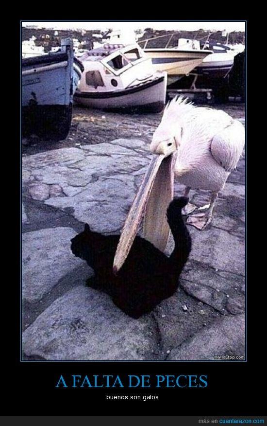 comer,gato,peces,pelicano