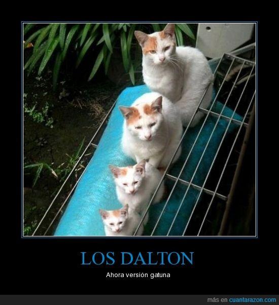 dalton,gatos,iguales