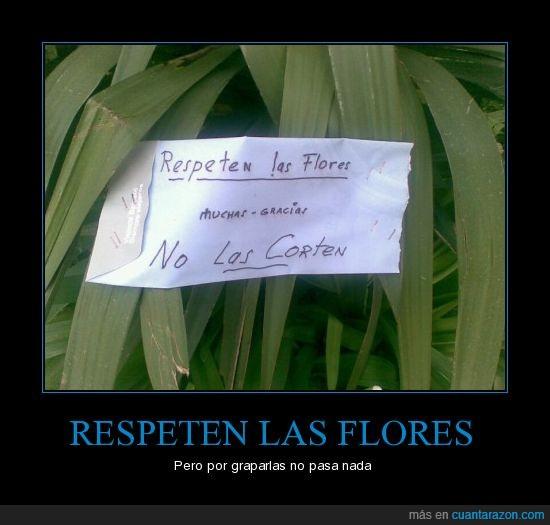 Flores,grapas,legazpi,respeto