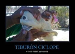 Enlace a TIBURÓN CICLOPE