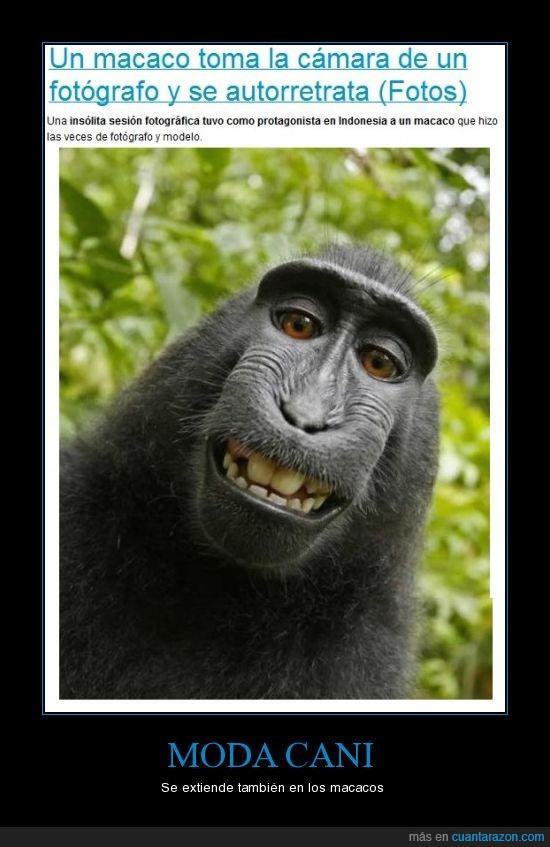 autofoto,macaco,moda cani