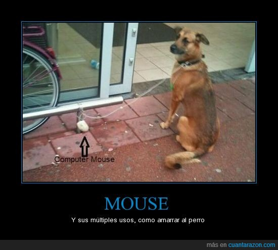 mouse,perro,tienda