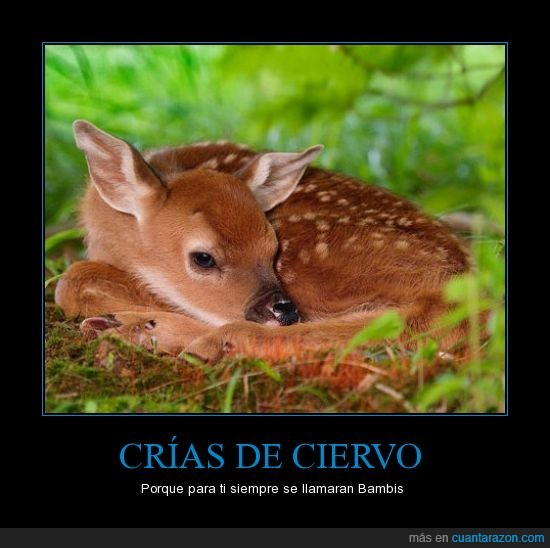 animal,bambi,bosque,ciervo,crias,naturaleza
