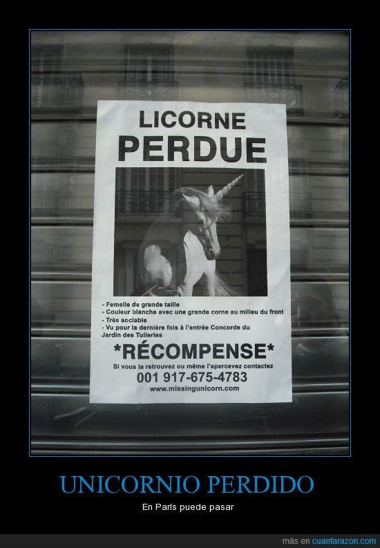 cartel,perdido,unicornio