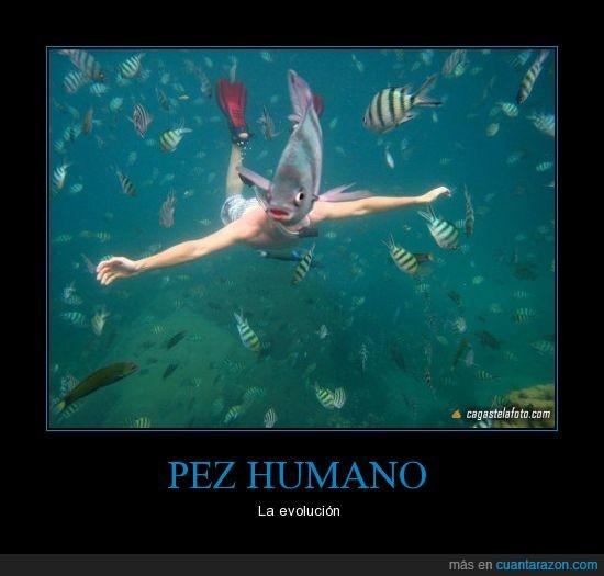 animal,buceo,foto,mar,perspectiva,pez