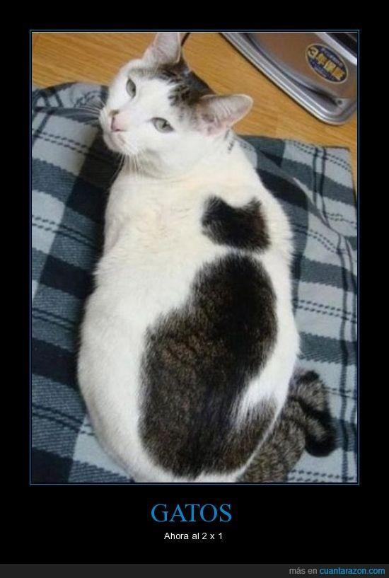 espalda,Gatos,pelaje