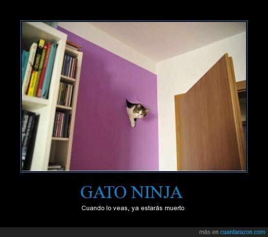 dios,gato ninja