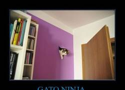Enlace a GATO NINJA