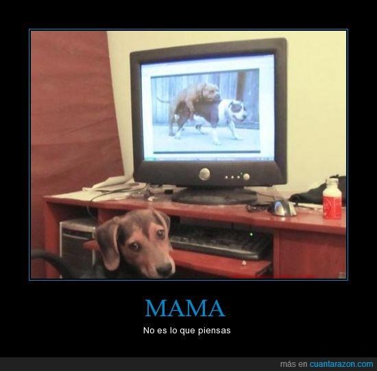 ordenador,perro,tube