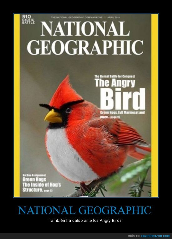angry bird,national geographic