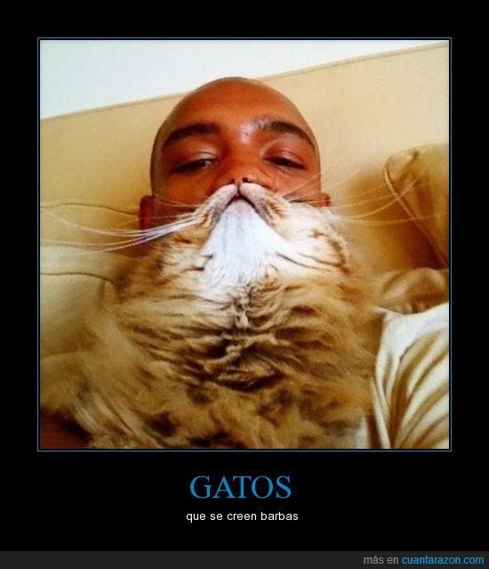 barba,gato