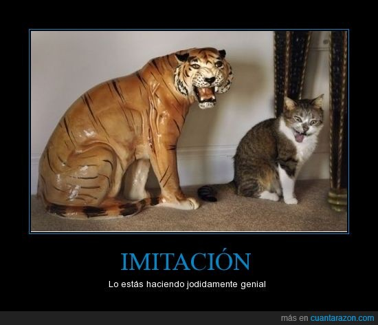 gato,imitación,imitar,leon