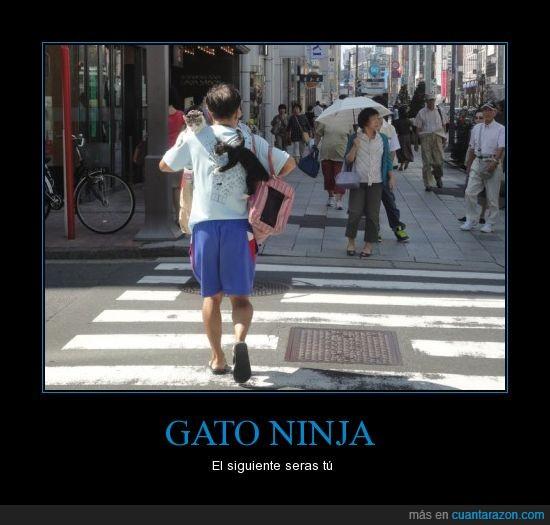 ataque,china,Gato,morir,moriras,ninja