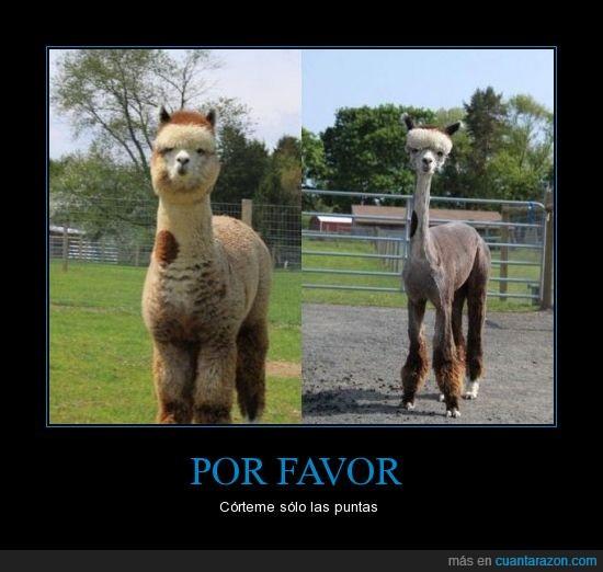 fail,Llama,peluquero