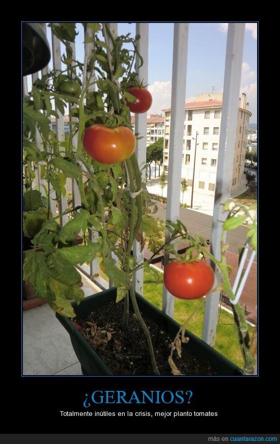 balcón,crisis,geranios,huerto,tomates
