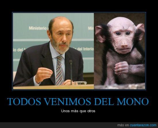 mono,política,Rubalcaba
