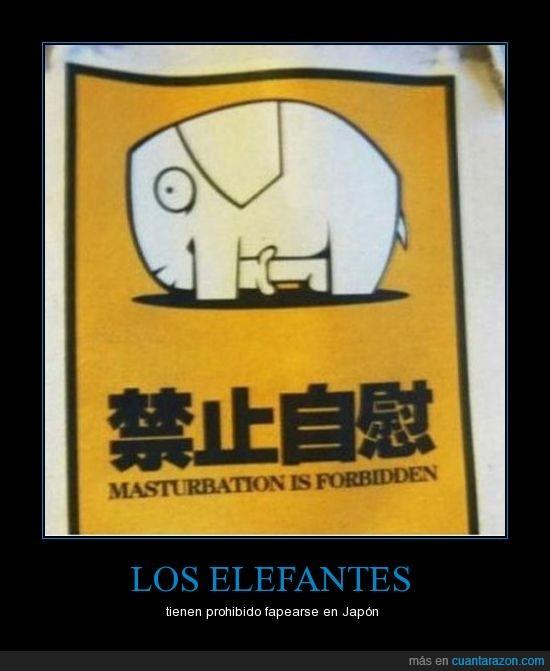 elefante,japón