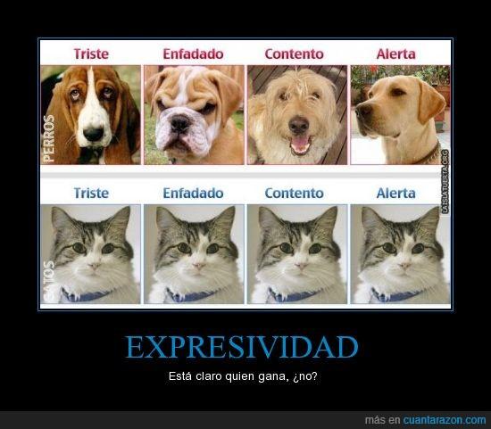 expresivo,gato,perro