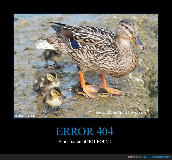 amor maternal,aplastado,error 404,patito,pato