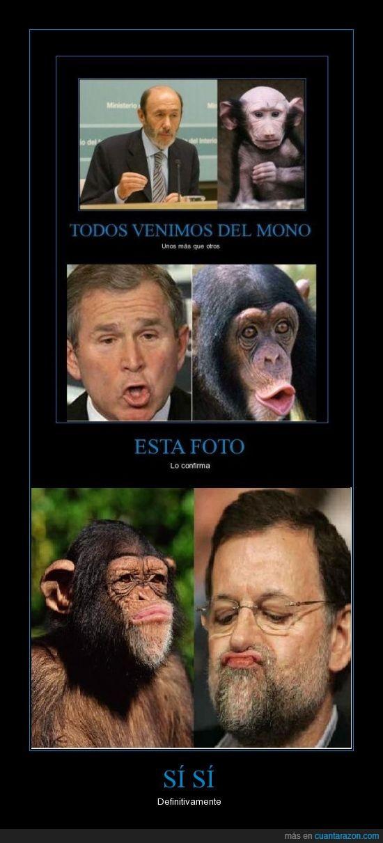 bush,chimpancé,paresidos,rajoy