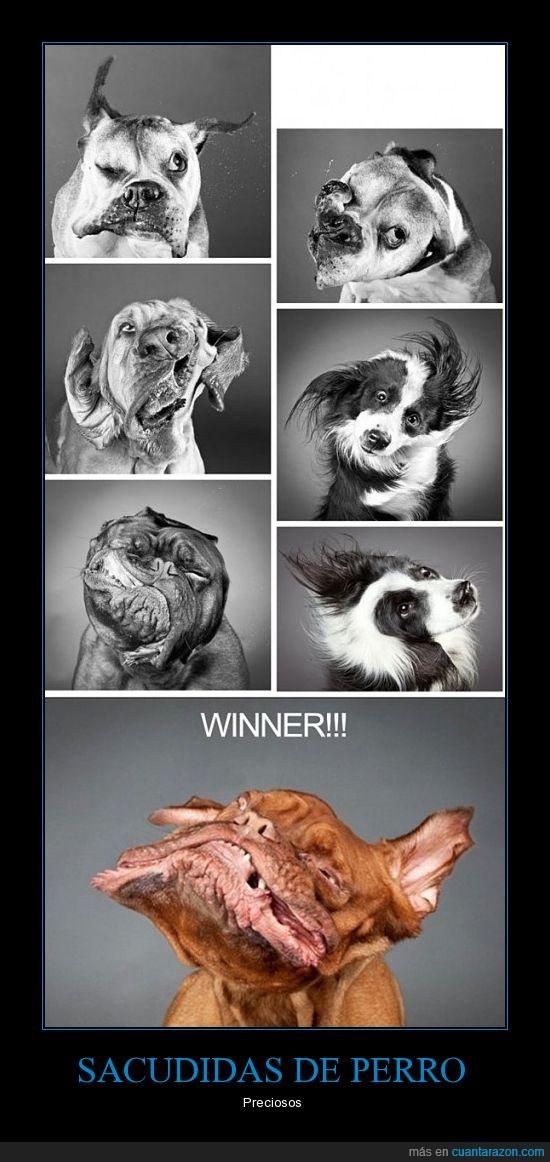 perros,sacudida