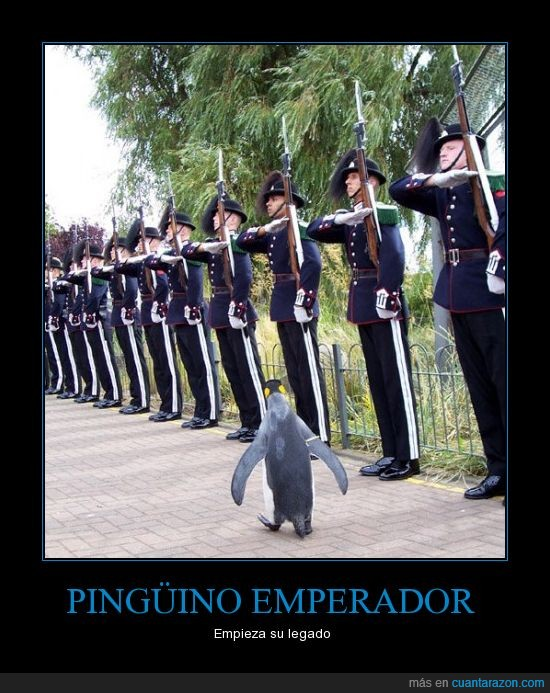 emperador,guardia,legado,pingüino