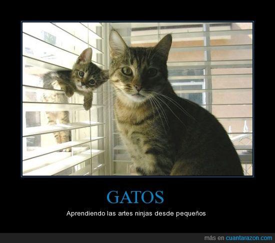 gatito,gato,ninja,pequeño