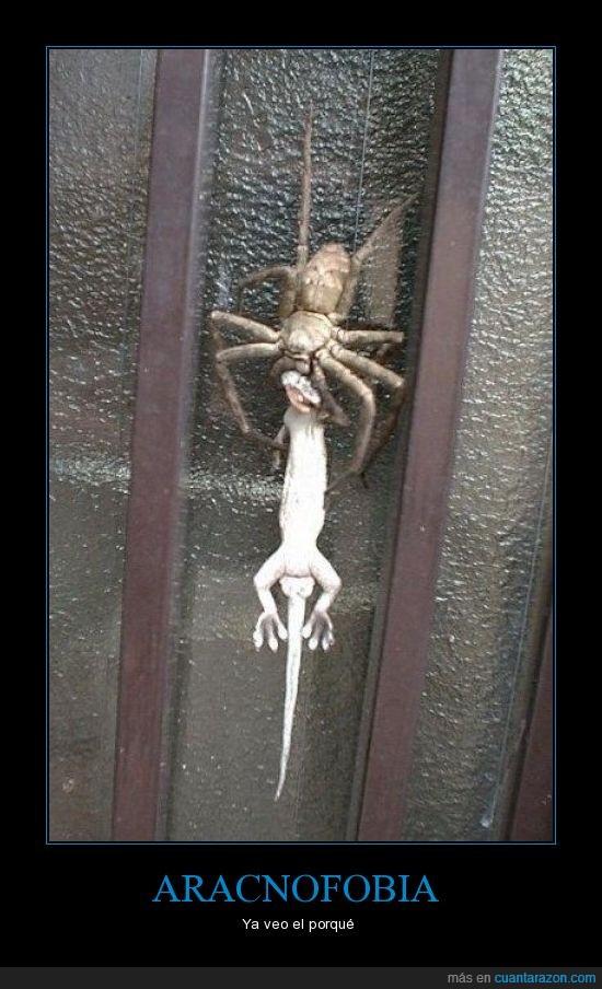 aracnofobia,araña,enorme