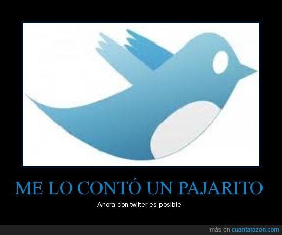 contar,frase,pajarito,twitter