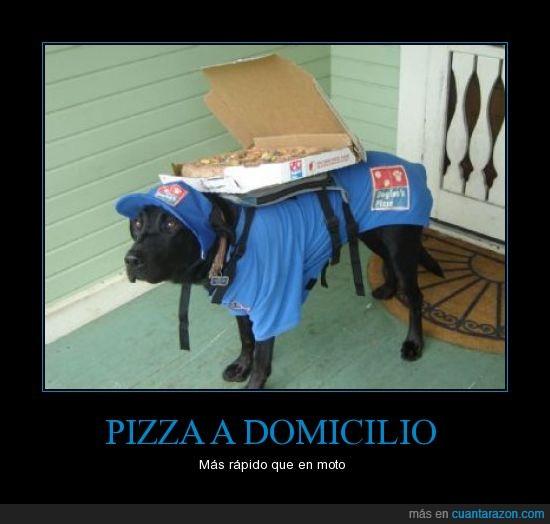 azul,dado,domino's,perro,pizza