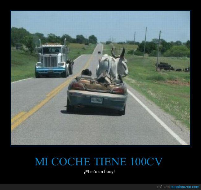buey,coche