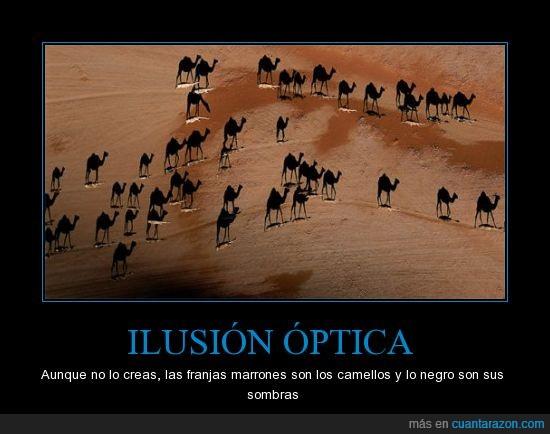 camello,desierto,sombra