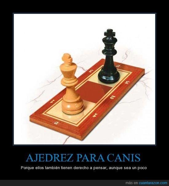 ajedrez,canis