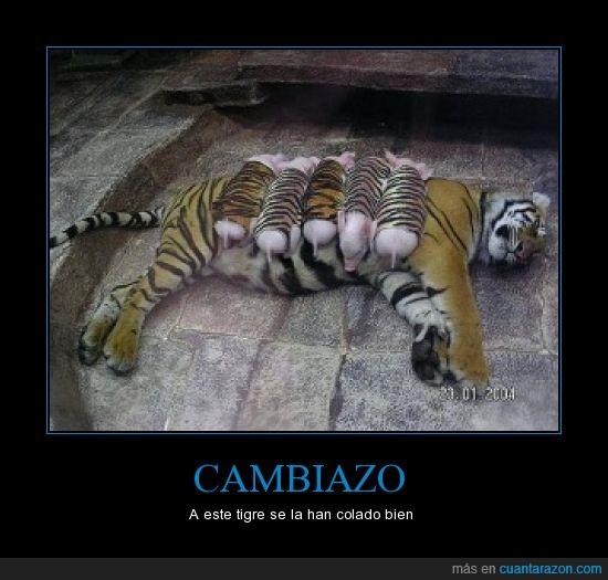 cerdos,tigres