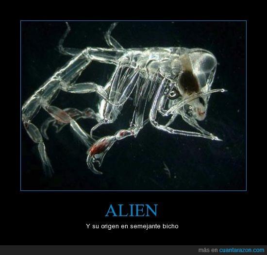 Alien,Cine,Miedo,Phronima,Ridley Scott