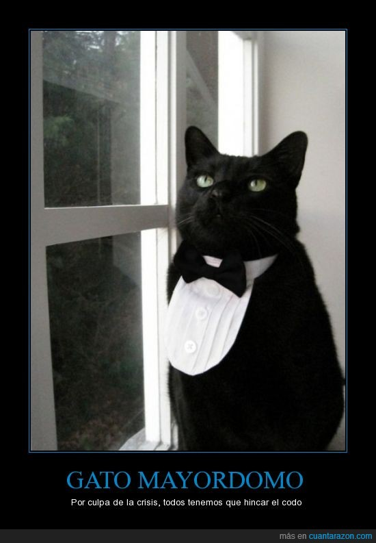 feel like a sir,gato,negro,smokin